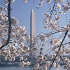 CHERRY BLOSSOM TIME & SMITHSONIAN MUSEUMS