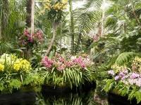 ny botanic